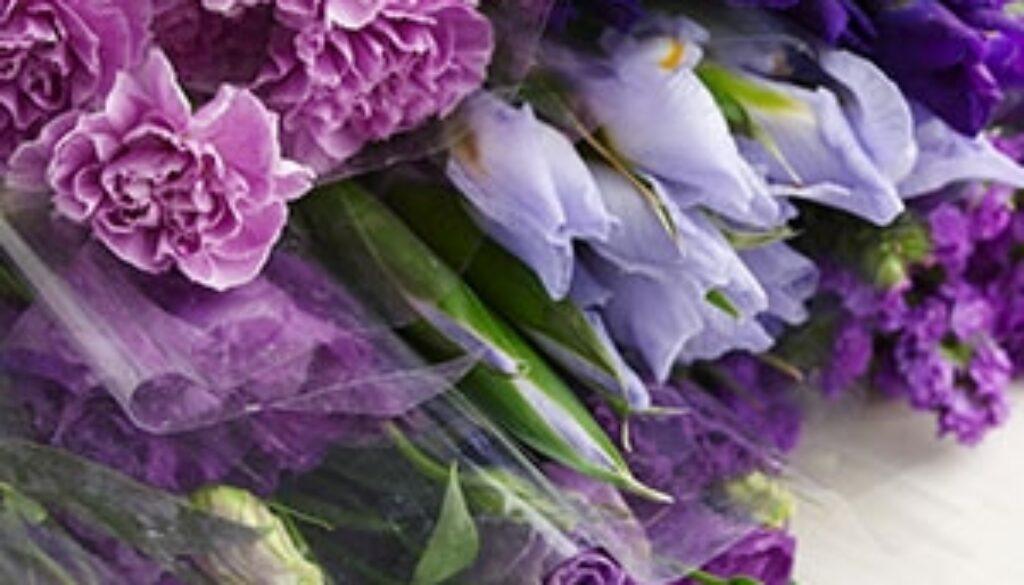 irises-statis-flowers_300.JPG