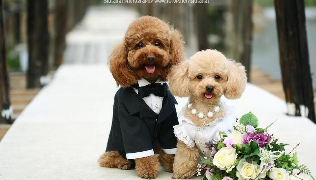 wedding+dog+1.jpg